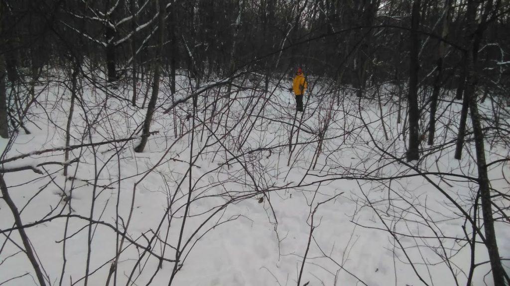 Отбор проб в лесных ландшафтах